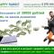 Happy Rabbit [Лохотрон] — отзывы о заработке на продаже трафика